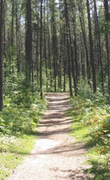 Timmins, Ontario. A path through trees.