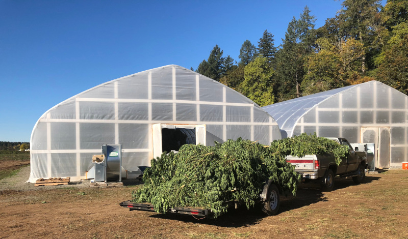 Global Hemp Group Inc. view outside of a greenhouse with a truck and trailer full of greenery.