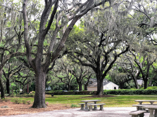 Beaufort, South Carolina park with trees and cement benches.