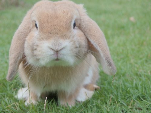 American Pet Products Association. A bunny rabbit sitting on grass.