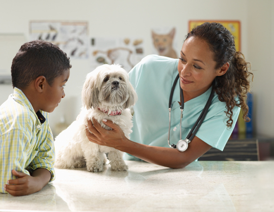Pethealth; a boy and dog with a veterinarian and the dog on a table.