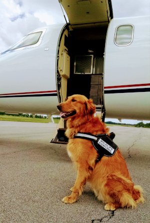 The Canandaigua Airport Manager Bob Mincer's dog Fergus.