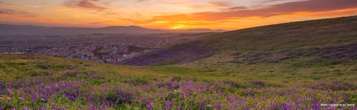 Dublin, California scenic view at sunset of the town with purple flowers in the foreground on a hillside, photo by Jay K Huang Photography.