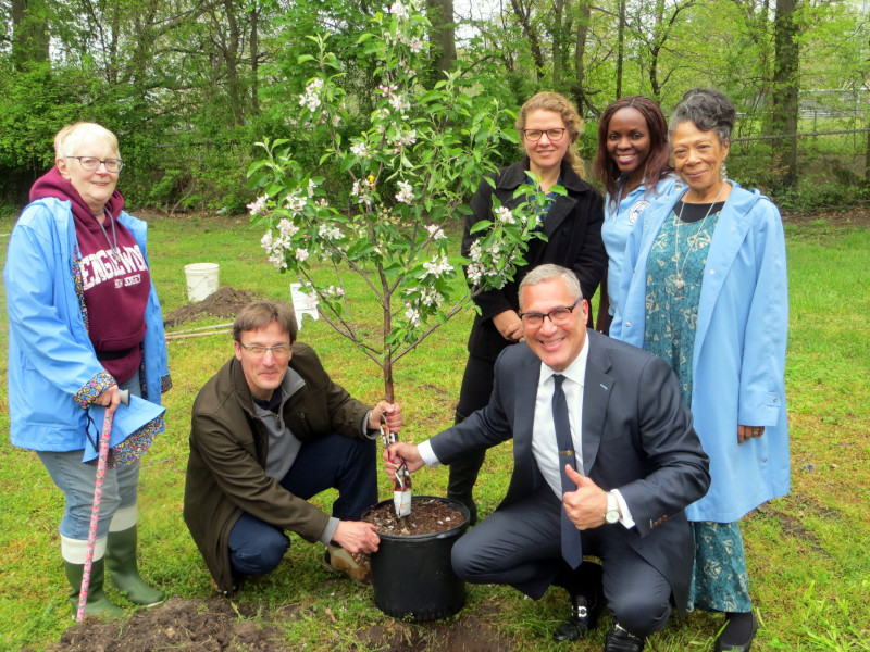 Englewood, New Jersey Jim Fedorko, Mayor Michael Wildes, Aliza Solomon, Caroline Machiri, and Crystal Brown planting an apple tree.