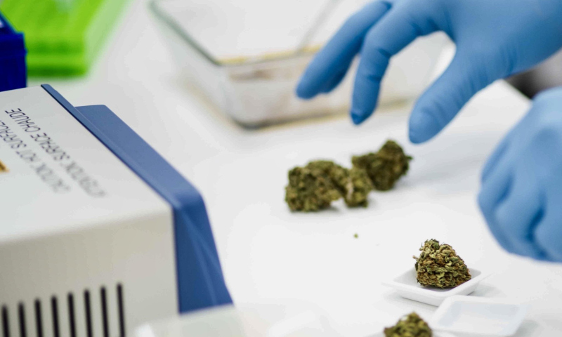 Cannabics Pharmaceuticals Inc. gloved hands handling cannabis buds with equipment nearby.