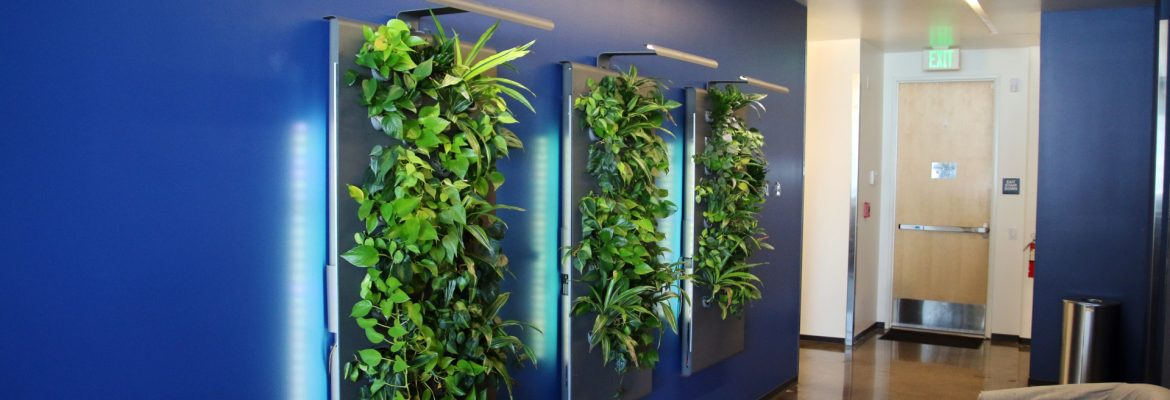 Partner Engineering plantwall inside of a building.