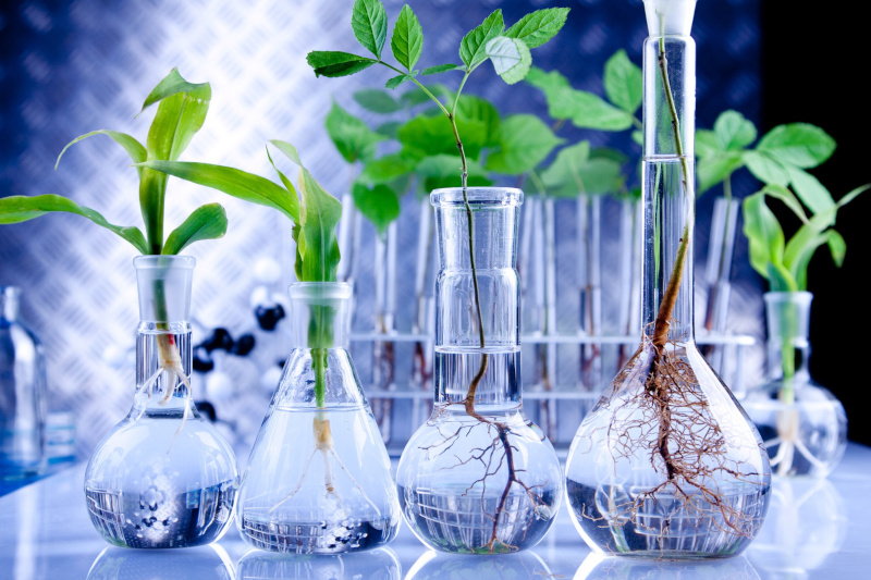 BioTalent Canada glassware with plants and water in them.