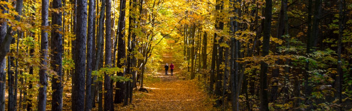 Forest Stewardship Council of Canada Forest during fall